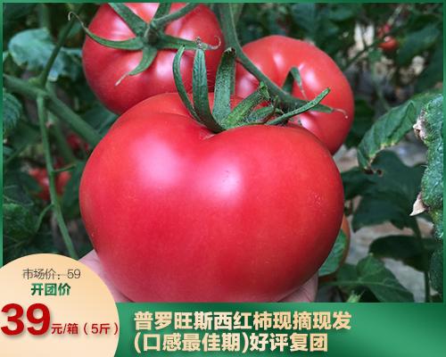 普罗旺斯西红柿现摘现发(口感最佳期)(03.28)